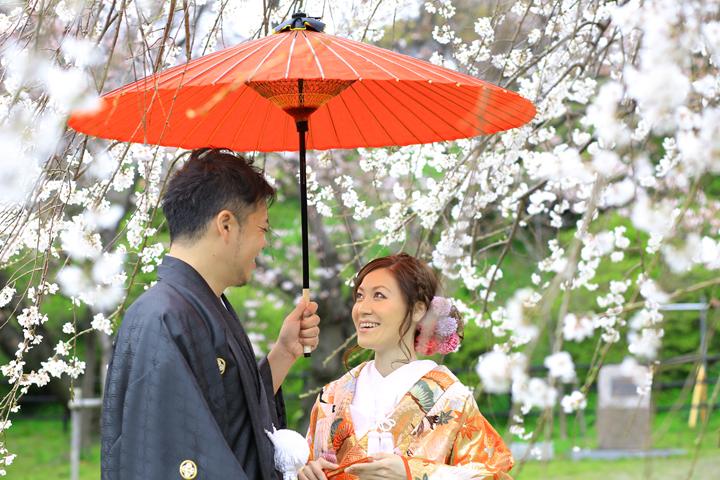 大濠公園の枝垂れ桜