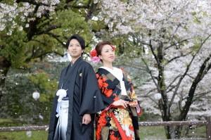 熊本 熊本城 さくら