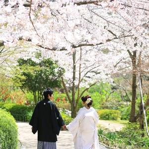山口・長府庭園前撮りプラン