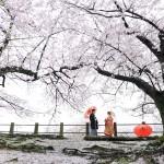 桜プラン早割キャンペーン2017-前撮り スタジオフィール 福岡 舞鶴公園