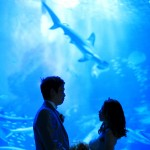 福岡,和装,洋装,前撮り,結婚式当日,,水族館マリンワールド