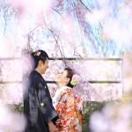 福岡,和装,洋装,前撮り,結婚式当日,,桜前撮りプラン-06