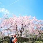 福岡,和装,洋装,前撮り,結婚式当日,,桜前撮りプラン-02