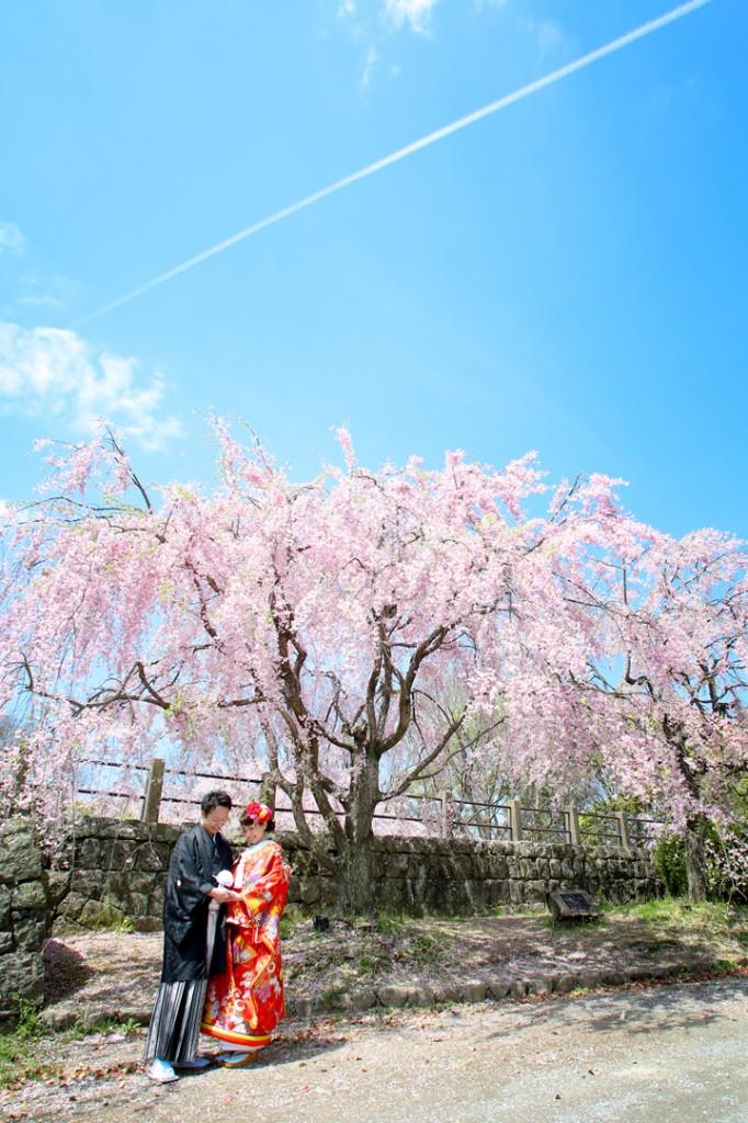 福岡 桜 前撮り