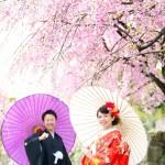 福岡,和装,洋装,前撮り,結婚式当日,,桜前撮りプラン-07