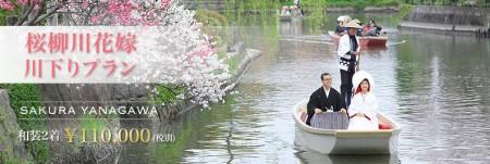 桜,柳川川下り,前撮り