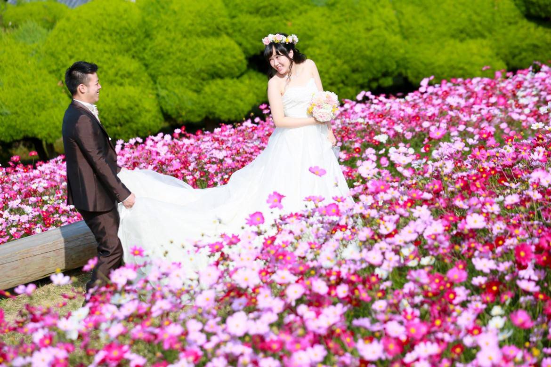 福岡 前撮り ドレス 能古島 コスモス 秋桜