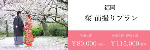 桜 前撮り 福岡 スタジオフィール