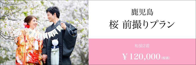 桜 前撮り 鹿児島 スタジオフィール