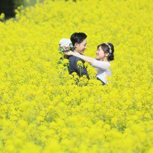 能古島 菜の花 前撮り 福岡 スタジオフィール