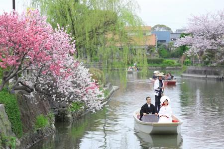 桜プラン早割キャンペーン2018-前撮り スタジオフィール 柳川 柳川川下り