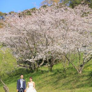 前撮り 福岡 桜 洋装