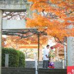 【福岡】紅葉八幡宮