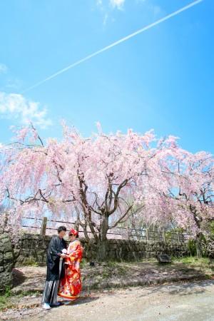 福岡 桜前撮りプラン-桜前撮りプラン-02