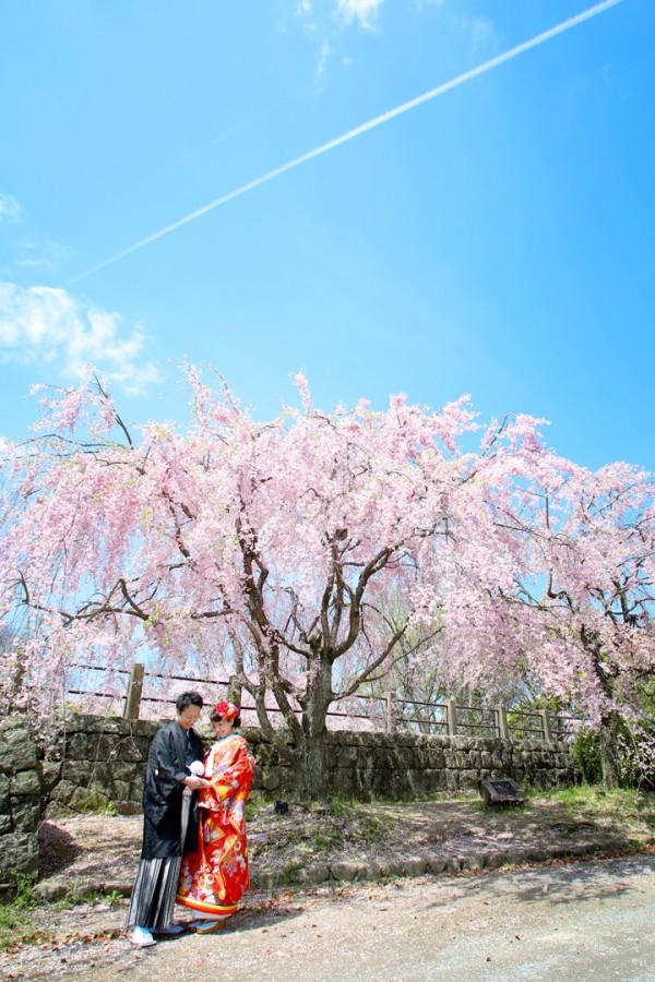 桜前撮りプラン