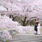 福岡,和装,洋装,前撮り,結婚式当日,,桜前撮りプラン-09