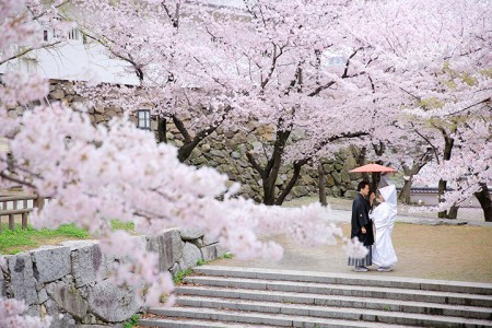 福岡 桜前撮りプラン-桜前撮りプラン-09