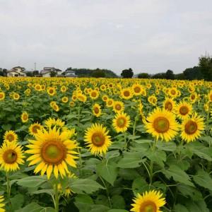 方保田東原遺跡公園