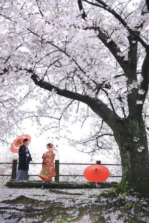 【福岡店】桜プラン早割キャンペーン2019-