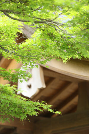 出水神社 熊本 水前寺公園 スタジオフィール