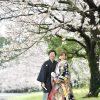 鹿児島 桜前撮り 和装 吉野公園 スタジオフィール