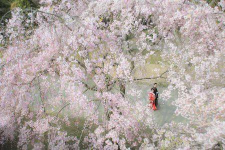 【福岡店】桜プラン早割キャンペーン2021-桜前撮り スタジオフィール