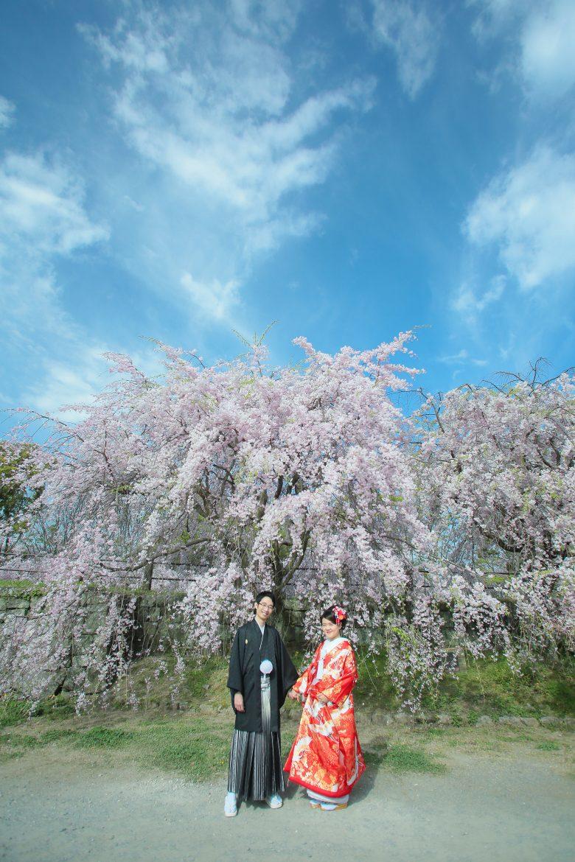 福岡 桜 和装前撮り 舞鶴公園 スタジオフィール