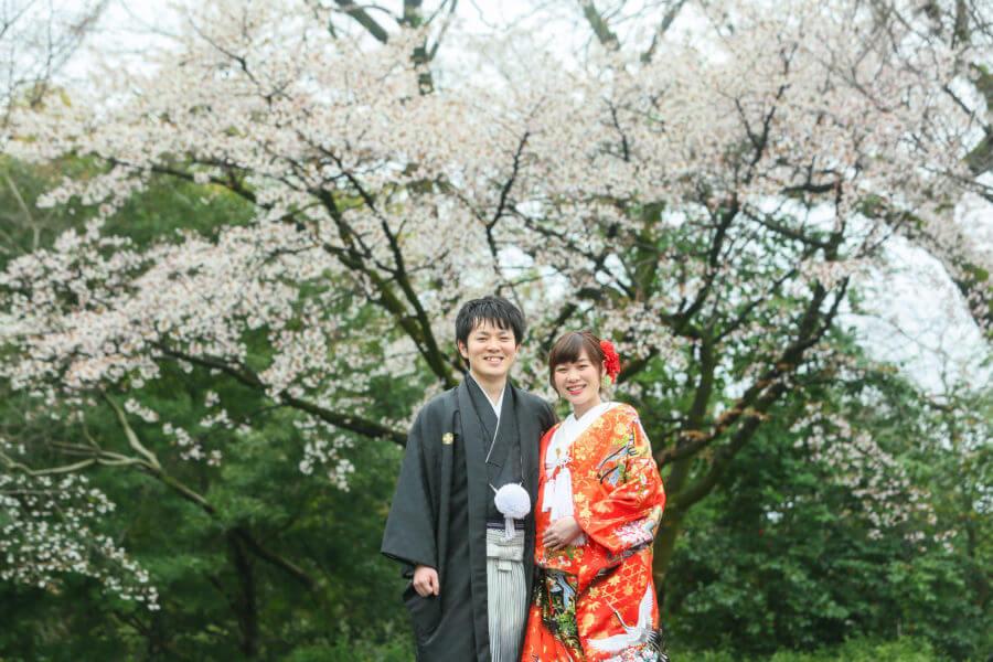 熊本城 桜 早咲き 満開 前撮り スタジオフィール