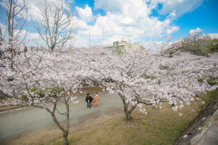 さくら 桜 舞鶴公園 スタジオフィール
