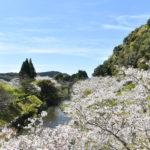 岩屋公園 桜和装前撮り