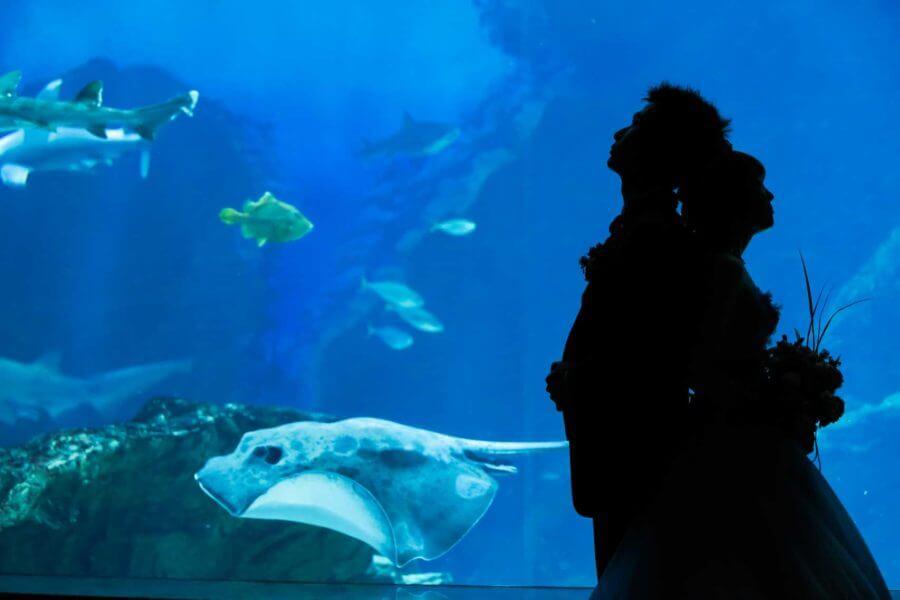 福岡 前撮り マリンワールド 水族館